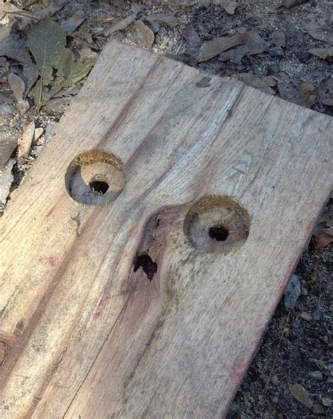Funny Faces Found on Inanimate Objects - Thaumaturgical